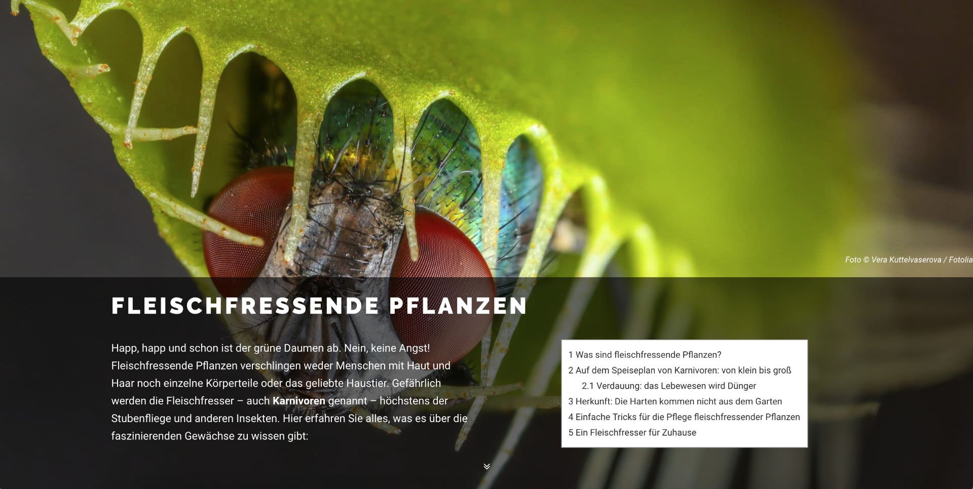 Referenz (Webdesign): fleischfressende-pflanze.com