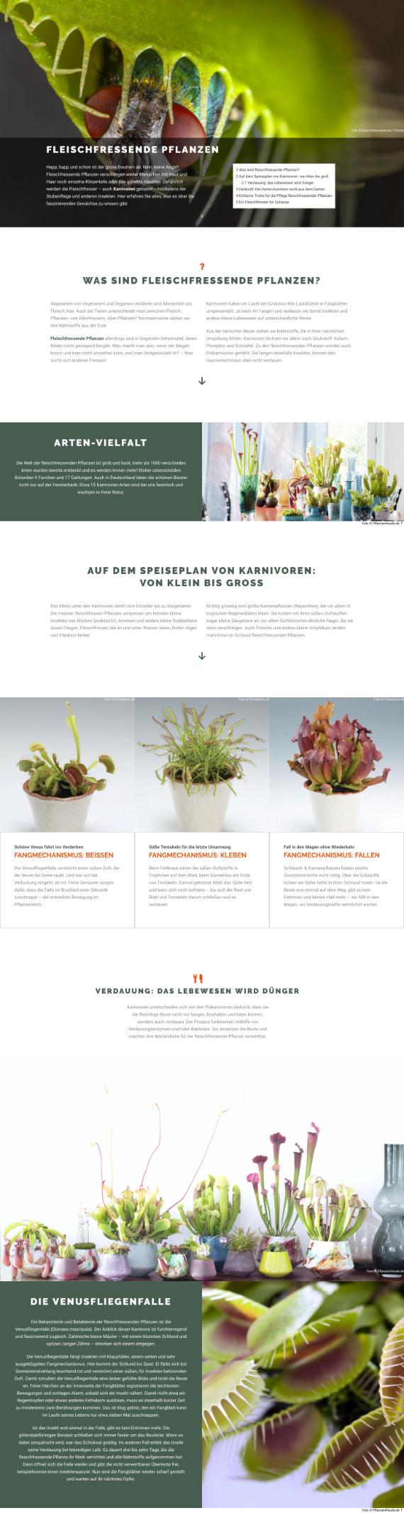 Webdesign für Fleischfressende Pflanzen