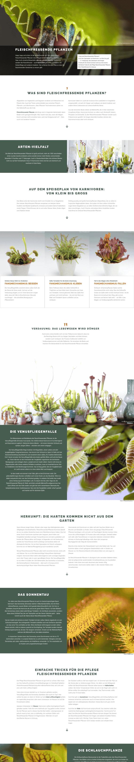 WordPress-Webdesign Referenz: Webseite von Fleischfressende Pflanzen